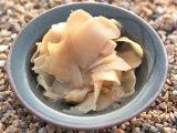 Главное фото рецепта Имбирь маринованный