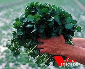 Растение жеруха