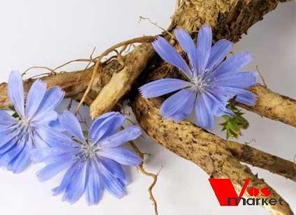 Цикорий - корни и чветочек
