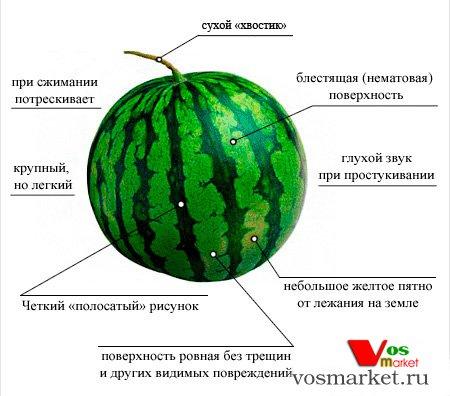 На картинке советы по выбору вкусного арбуза