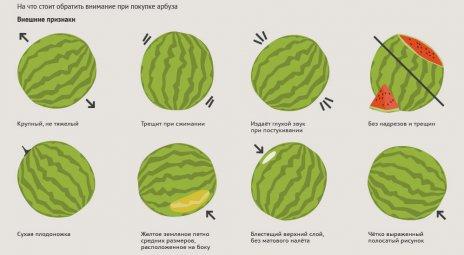 Советы по выбору арбуза схемой