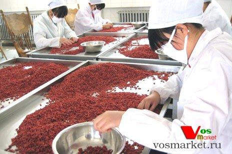 Сортировка ягод Годжи перед упаковкой