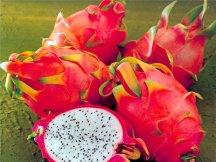 Фотография по темеПитахайя - драконов фрукт