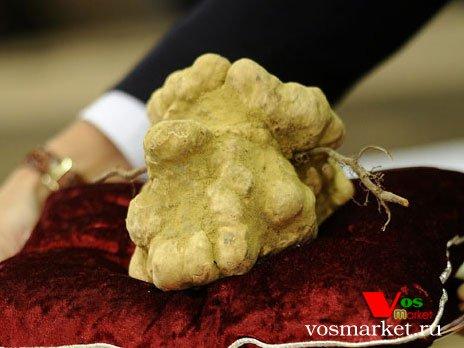 Эксклюзивные грибы Белые трюфели