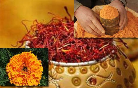 Цветок и порошок шафрана