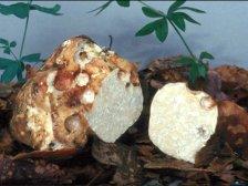 Разрез Белых грибов