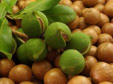Свежо собранные орехи Макадамия