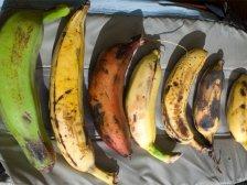 Плоды разных сортов