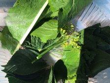 Листья и зедень для соленых огурцов